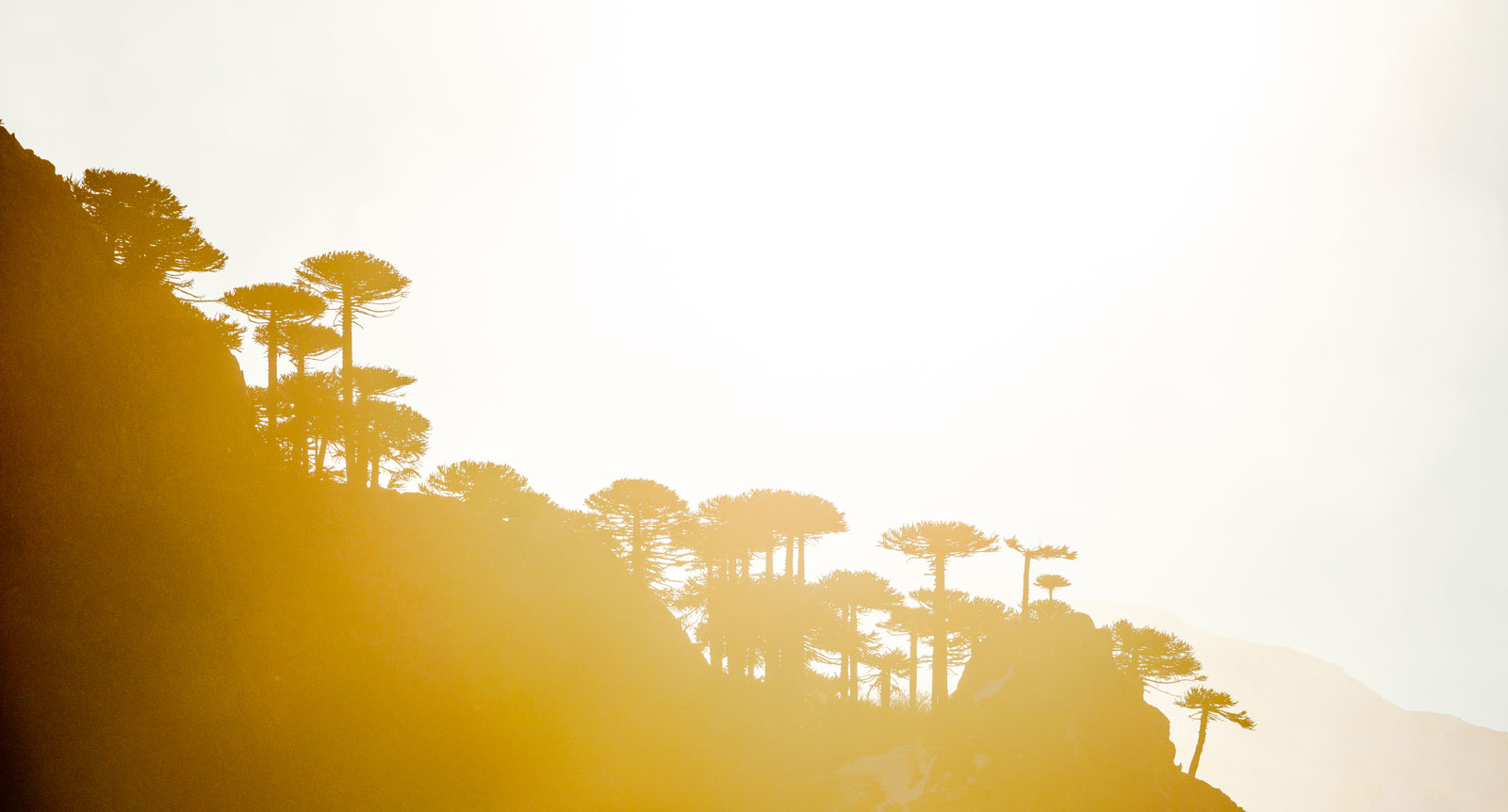 Arucaria sunset. Photo Courtesy: Ben Girardi- Adventure in Argentina