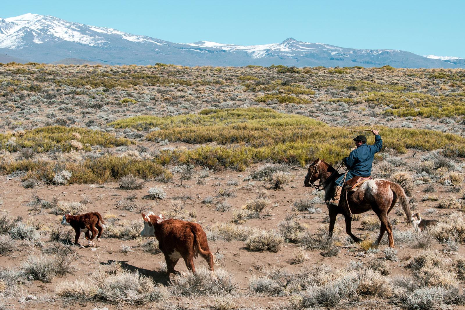 Gaucho. Photo Courtesy: Ben Girardi - Adventure in Argentina