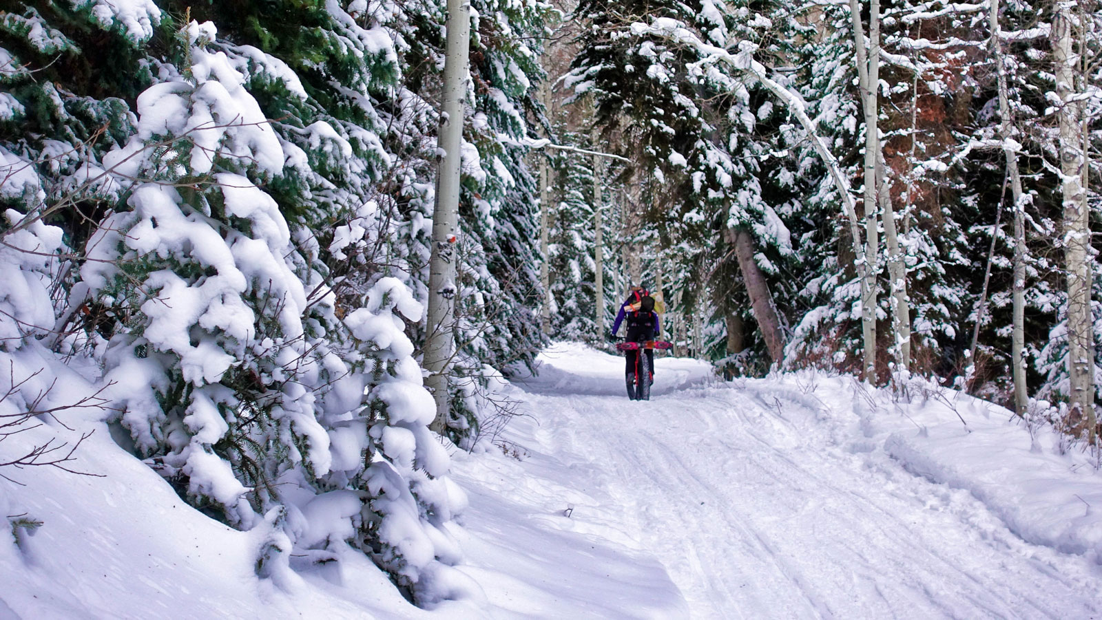 Riding through snow covered woods.